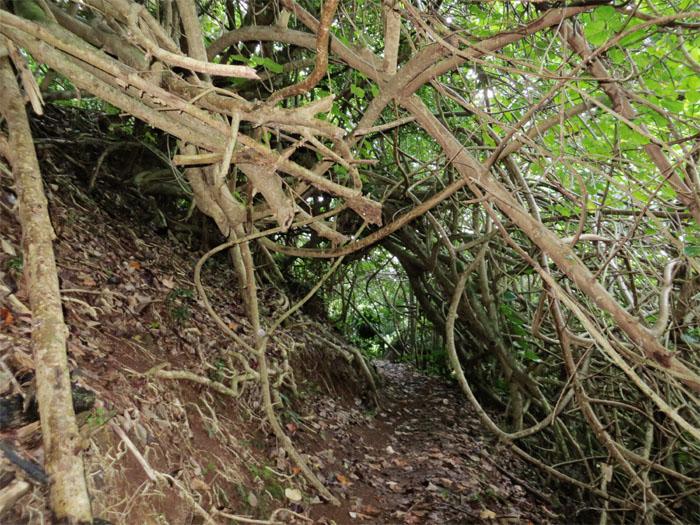 Tangled trail