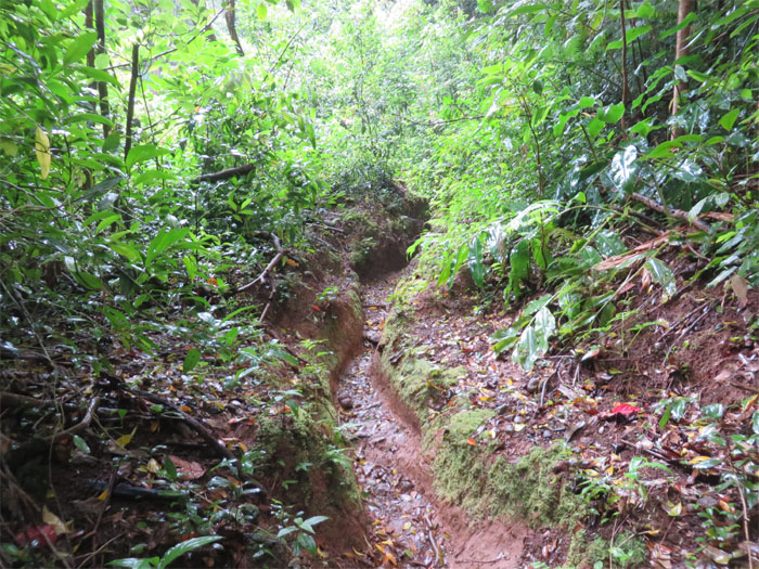 Ditch trail