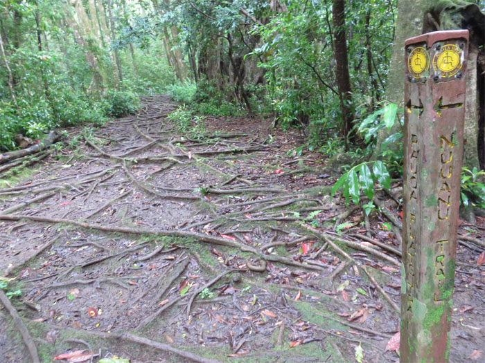 Nuuanu trail junction