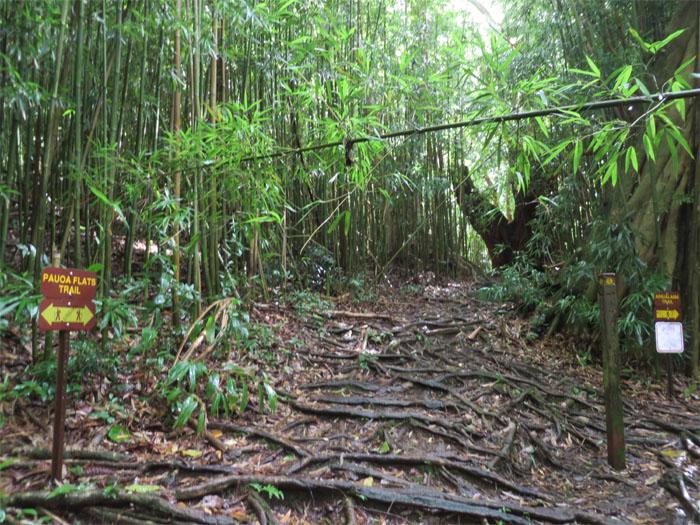 Ahuilamu Trail junction