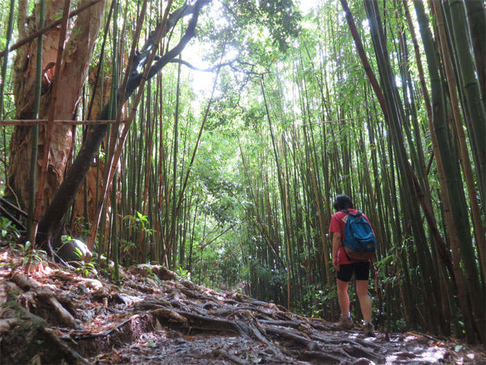 Bamboo trail