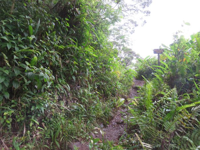 Puu Ohia Trail junction