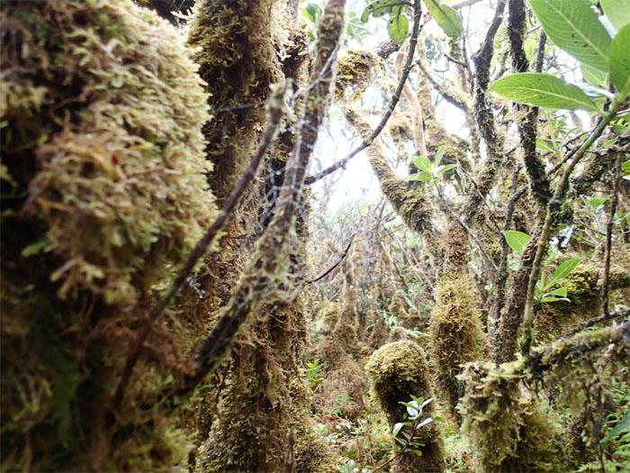 Got moss?