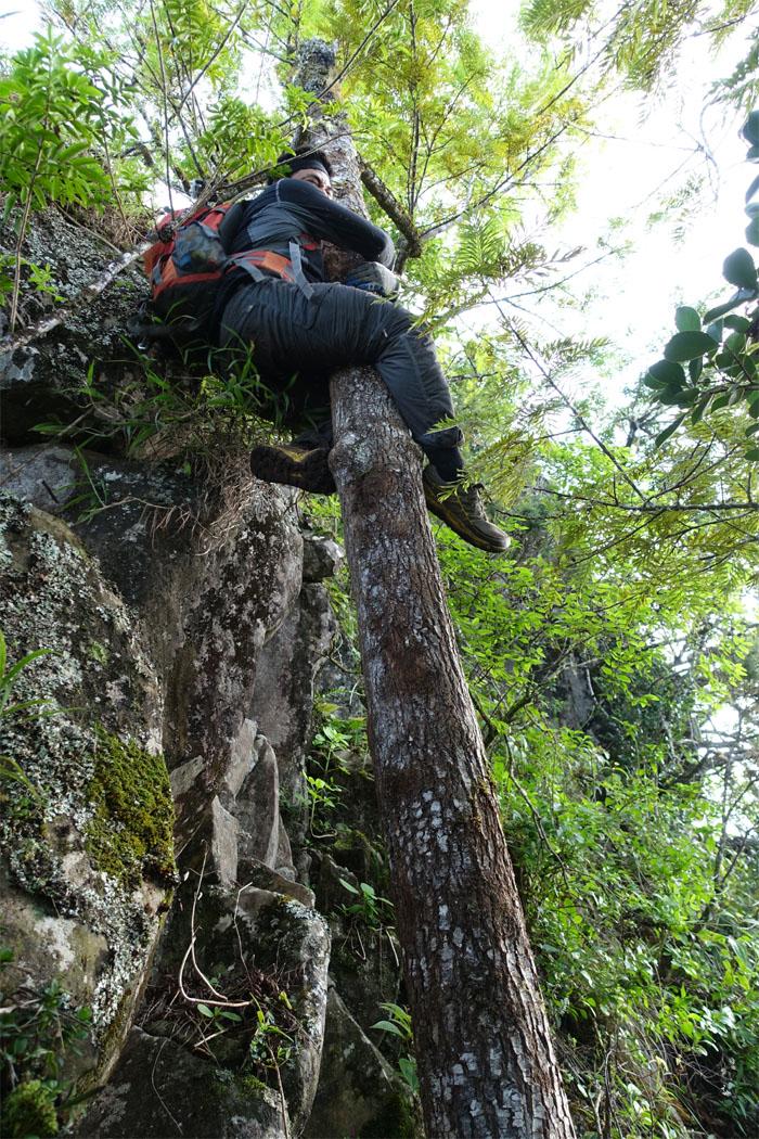 Hiker's pole