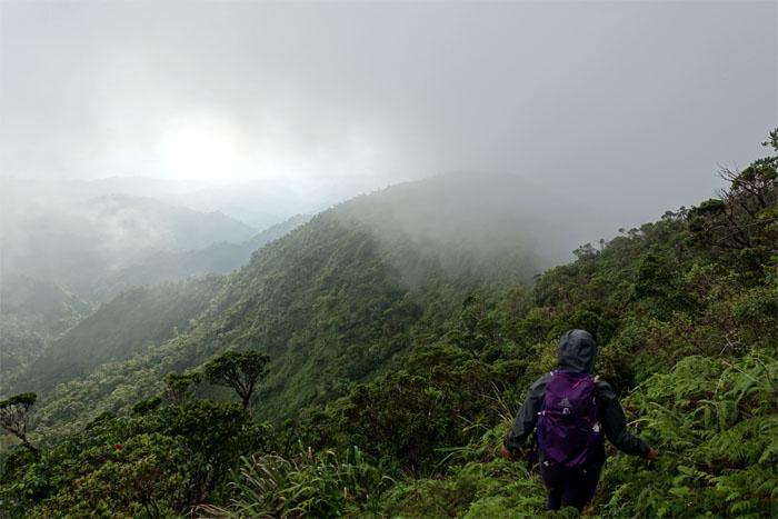 Hiking Wahiawa Hills To Schofield Waikane Trail Kenjisaito