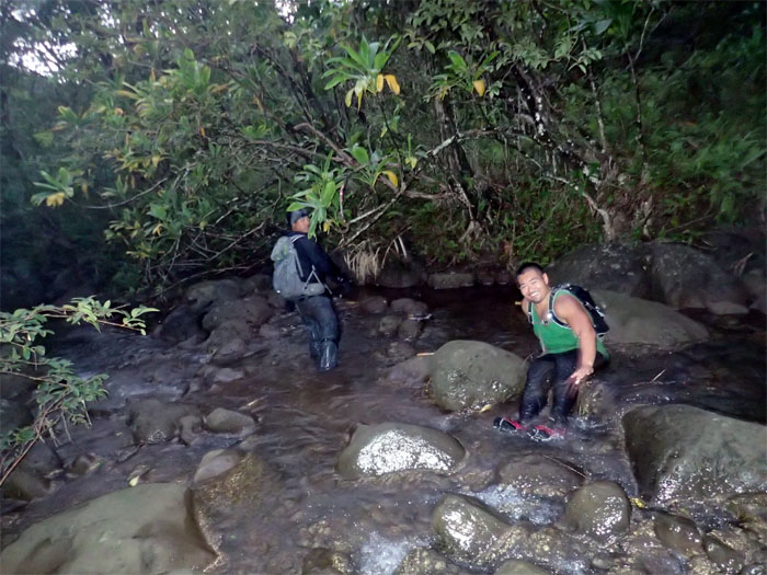Waimalu Stream