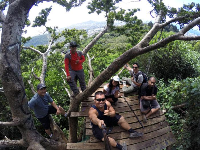 Tantalus treehouse