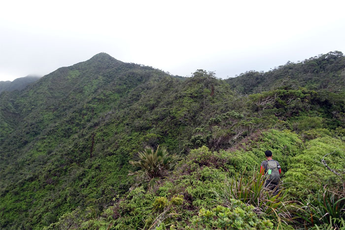 Aiea Ridge