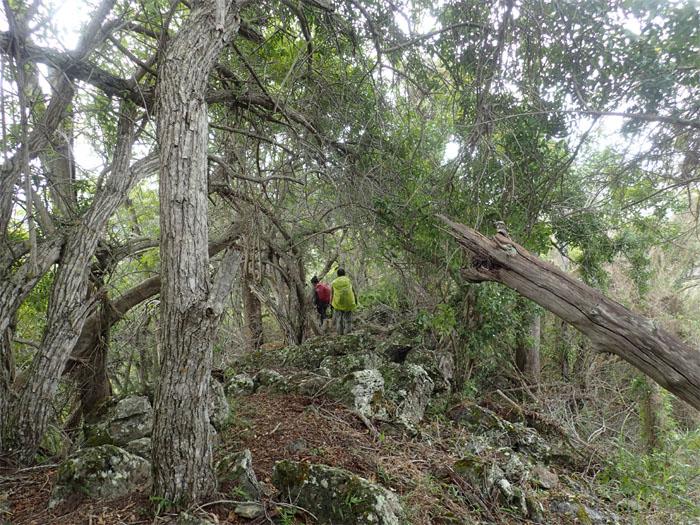 Kanehoa Trail