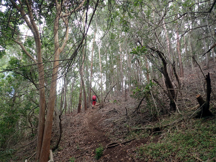 Honuliuli Forest Reserve