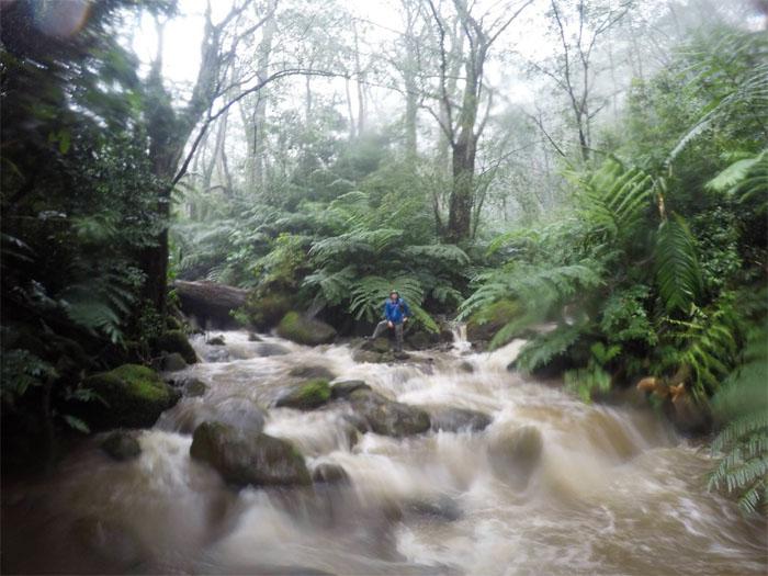Waihi Stream
