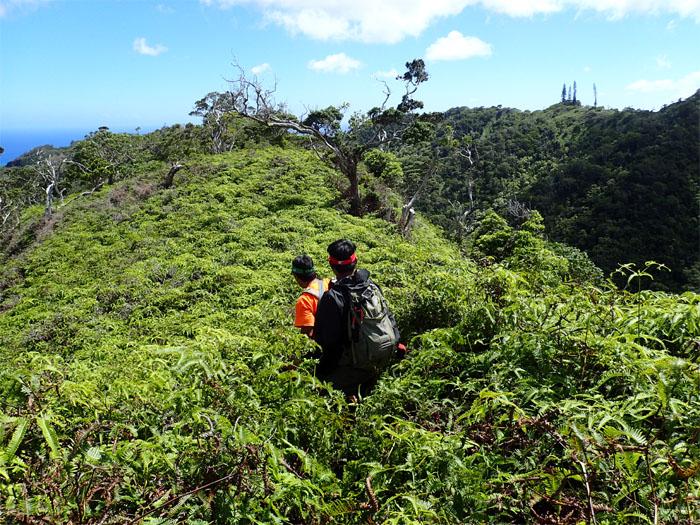 Waialae Nui Ridge