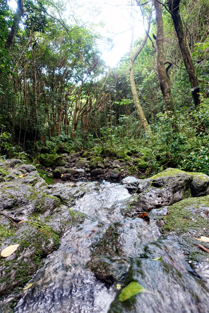 Kuli'ou'ou Valley Trail