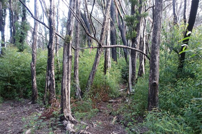 Wahiawa Hills