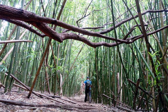 'Aihualama Trail