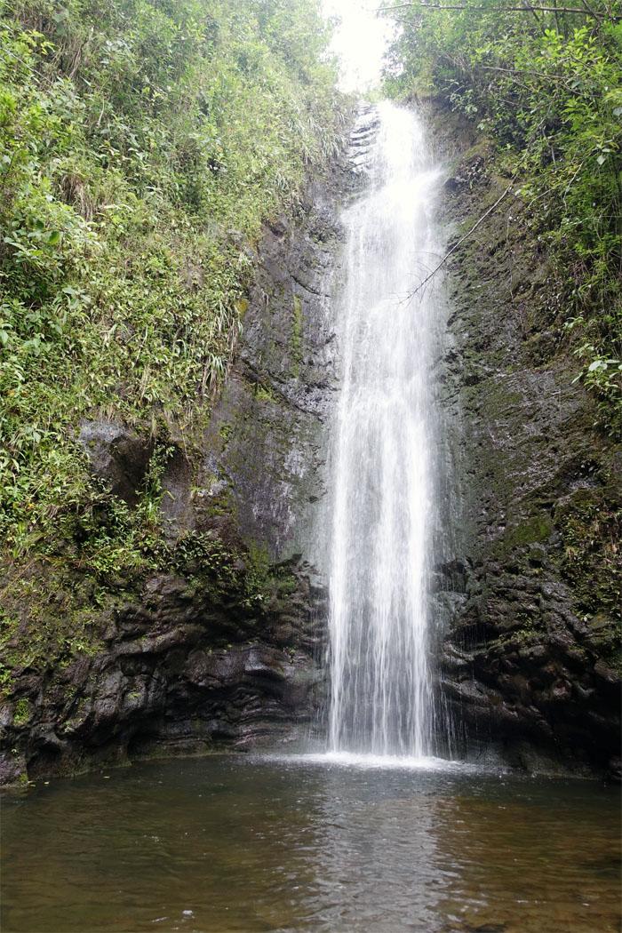 Manoa Falls #3