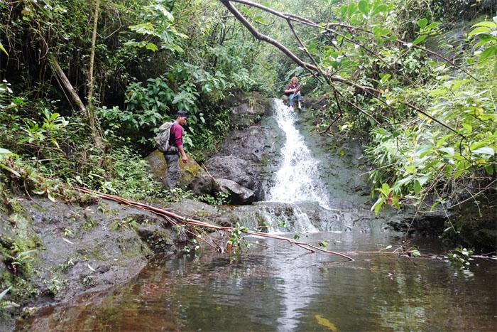 Manoa Falls #6