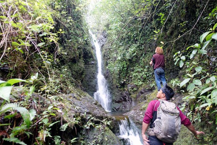 Manoa Falls #7