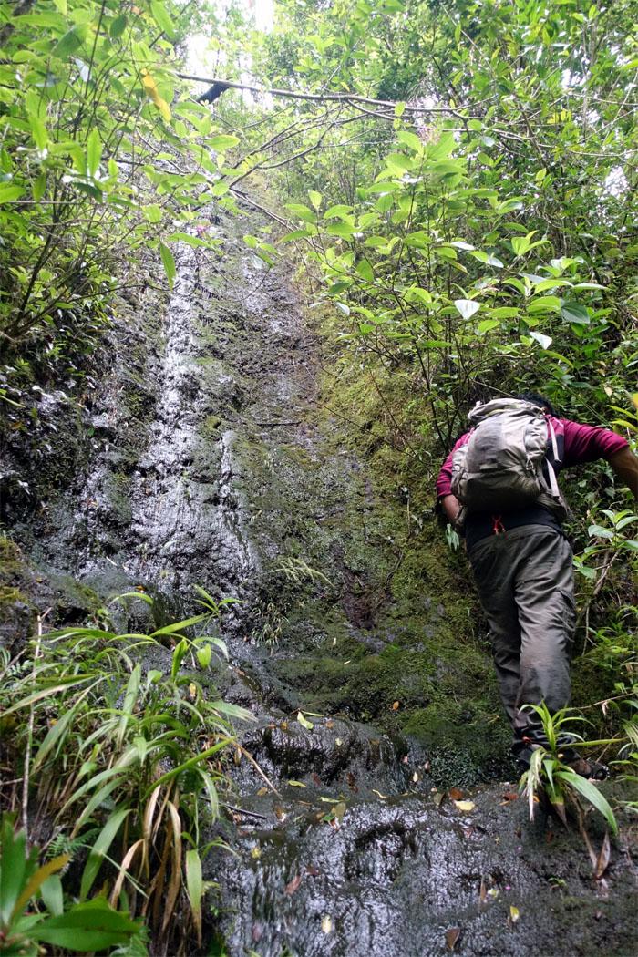 Manoa Falls #8