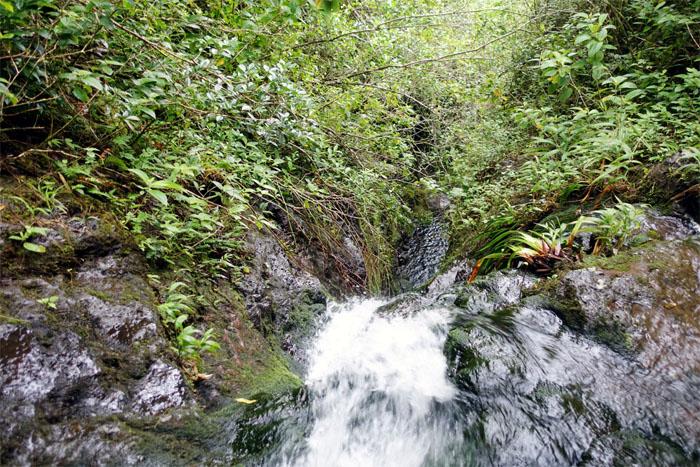 Manoa Falls #9