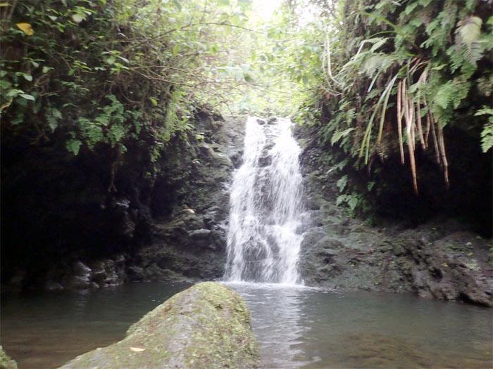 Manoa Falls #10