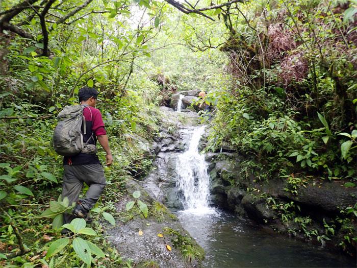 Manoa Falls #12