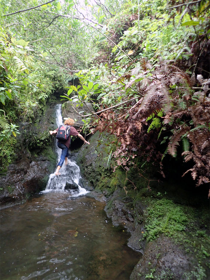 Manoa Falls #13