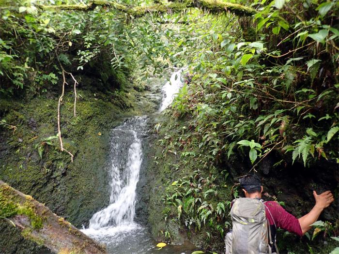 Manoa Falls #14