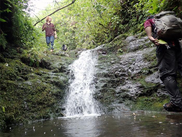 Manoa Falls #15