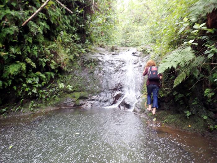 Manoa Falls #16