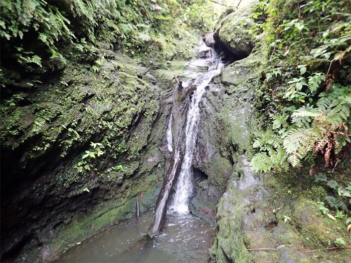 Manoa Falls #17