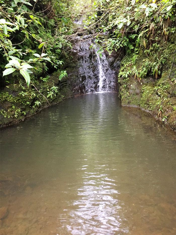 Manoa Falls #18