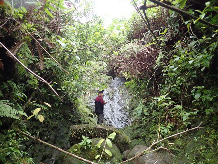 Manoa Falls #20
