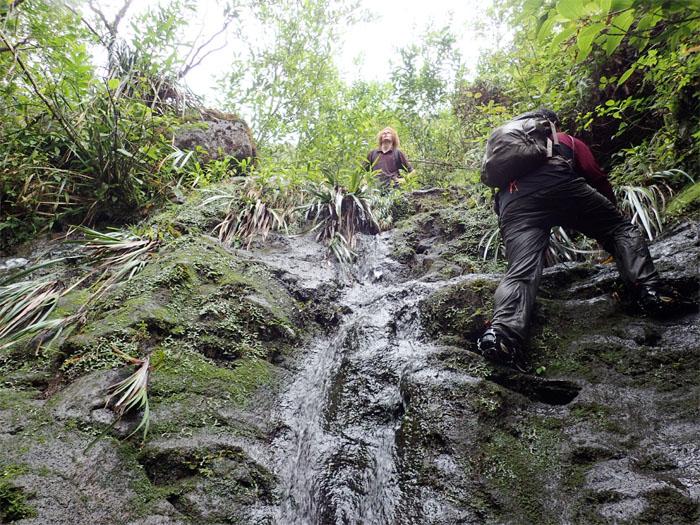 Manoa Falls #22