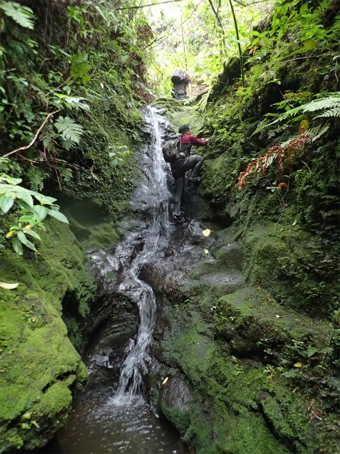 Manoa Falls #27