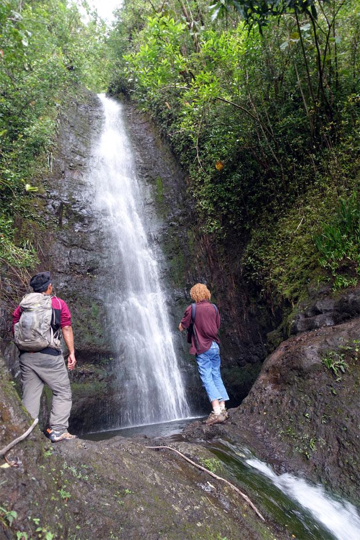Manoa Falls #2