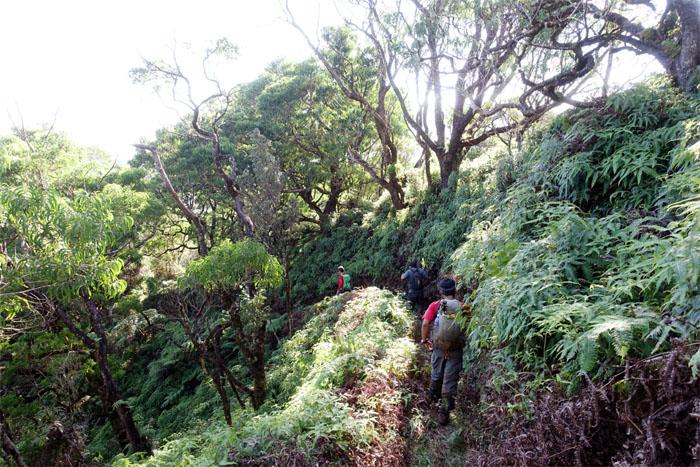 Schofield-Waikane Trail