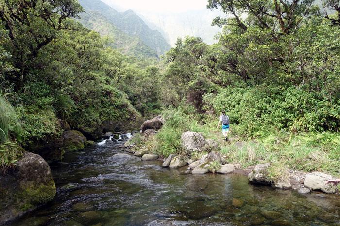 Wailua Stream