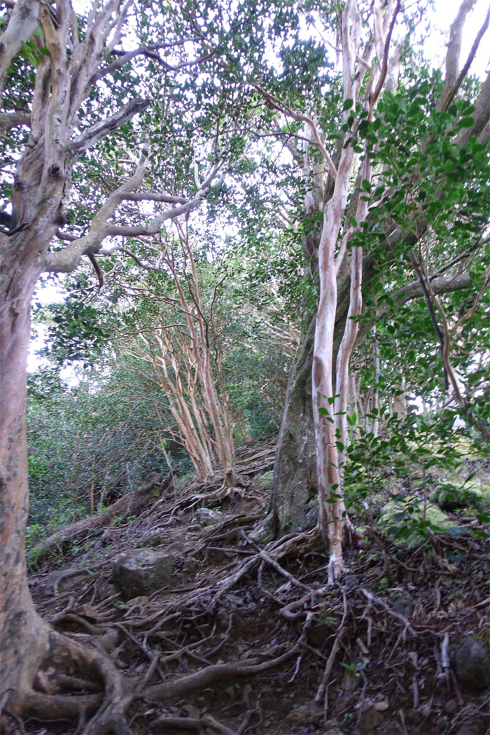 Kolowalu Trail