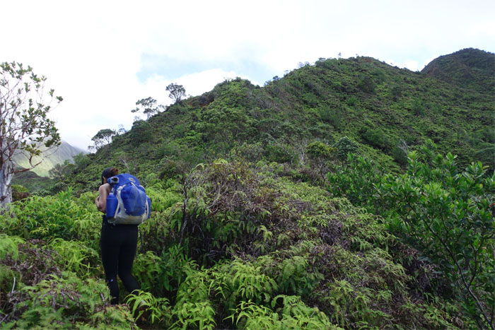 Waahila Trail