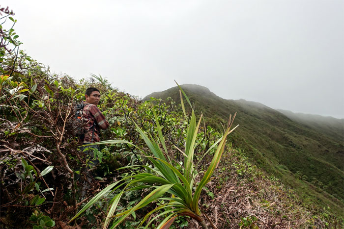 Waiahole Middle Ridge