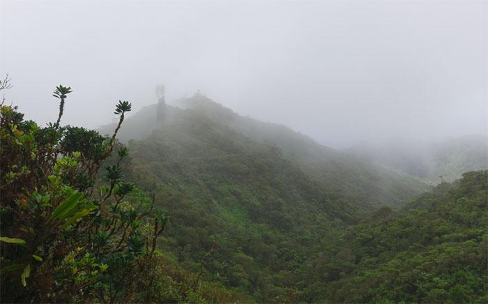 Kipapa Trail