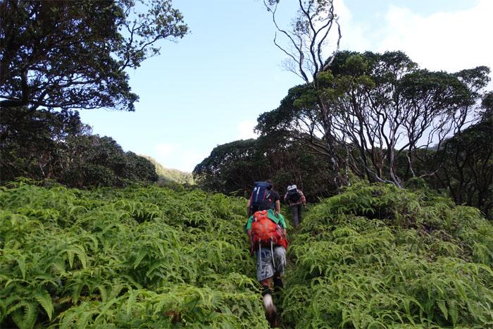 Godek-Jaskulski Trail