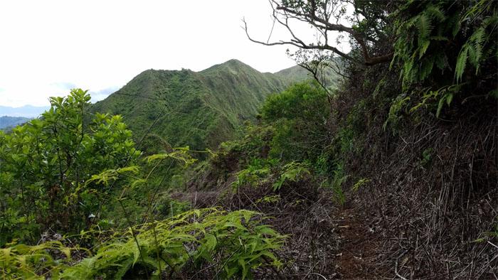 Castle Trail?