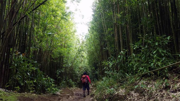 Pauoa Trail