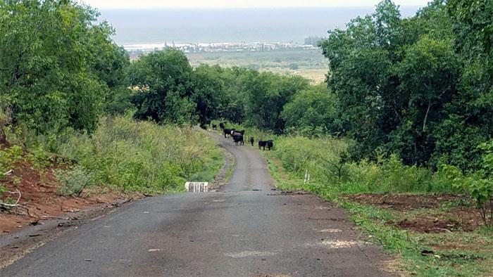 Cow Problem #1