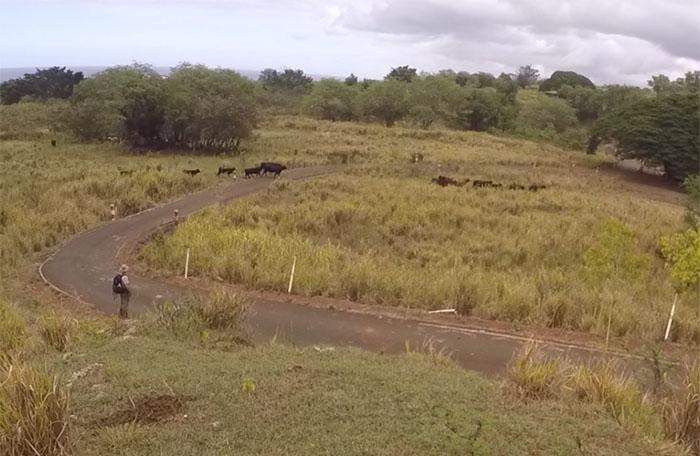 Cow Problem #3