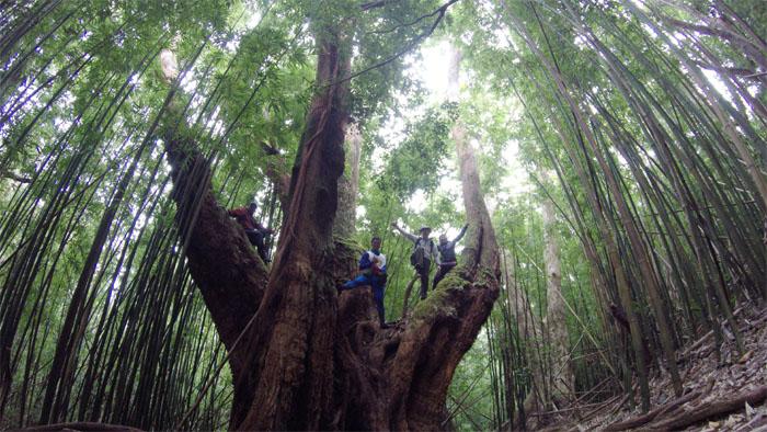 Pauoa Flats Trail