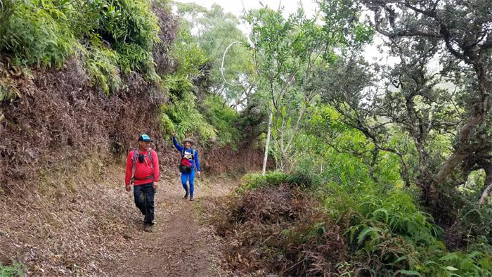 Nu'uanu Trail
