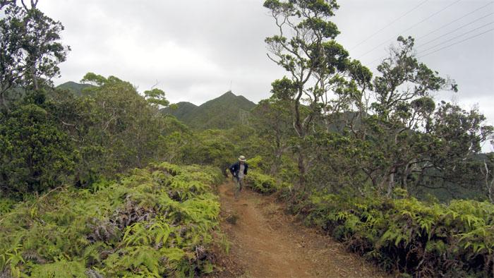 Wiliwilinui Ridge Trail